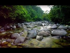 Want to relax? The BBC just released 40 hours of soothing Planet Earth footage on YouTube - Reviewed.com Televisions