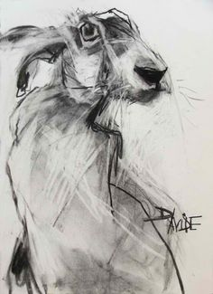drawing of hare - Google Search