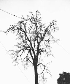 #MobilePhotographersWorld #shot #on #redminote4