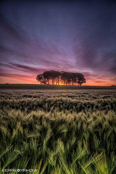 Photograph Barley sunrise by Kieran O Mahony  on 500px