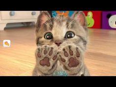 ❤Мимишный МАЛЕНЬКИЙ КОТЕНОК Мультик про котят Развлекательное видео Для малышей Симулятор кота - YouTube