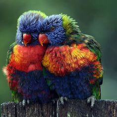 Love the colors! Beautiful.