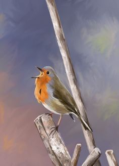 Drawing: robin