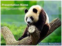Endangered Species Panda graphic design template. This Endangered Species Panda…