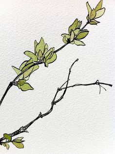 nature drawing pen and ink and watercolour by heatherstephenson