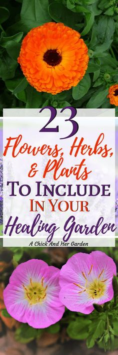 I never realized how many options there were when planning out my healing garden! Not to mention all the uses! This is a great list of plants for your soaps, salves, teas, tinctures and more! #healinggarden #ediblelandscape #landscapegardening #growfood #naturalhealth #naturalhealing #herbs #achickandhergarden