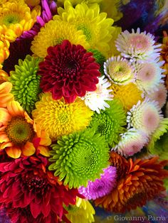 A wonderful mixture of Garden Mums...my absolute all time favorite, and it's my birthday flower!kp