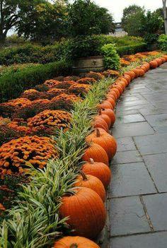 Pumpkins & Marigolds