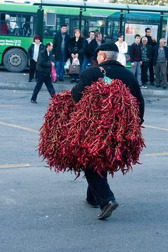carrying peppers to the market, Istanbul, Turkey