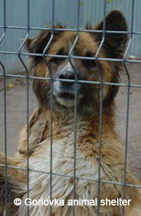 War Zone Emergency: 300 Ukraine dogs must be moved to Shelters ! Rettungsaktion für 300 ukrainische Hunde !
