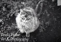 My Fb, Fb Page, 35mm Film, Amelia, Art Photography, Art Pieces, Cats, Artwork, Animals