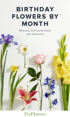 Find birthday flowers for your loved ones with the Birthday Flowers by Month guide from ProFlowers Love Flowers, Spring Flowers, Birth Month Flowers, Birthday Dinners, Flower Tattoos, Designs To Draw, Birthday Celebration, Flower Power, Flower Arrangements