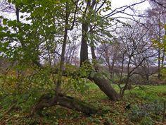 Niskalan arboretum syksyllä [Elina Nummi]
