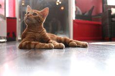 Charabica : Bar à chats à Grenoble ! / Cat café in Grenoble!