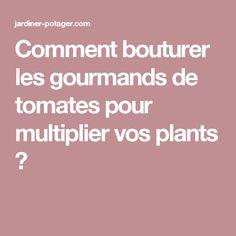 Comment bouturer les gourmands de tomates pour multiplier vos plants ?