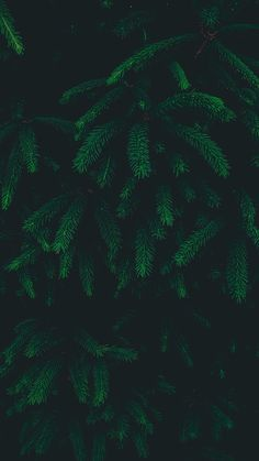 Tree Leaf Green Pattern Nature Dark Wallpaper Hd Iphone Quotes