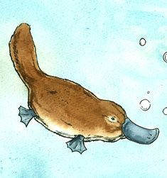 Items similar to Swimming Platypus Love -Original Watercolor painted print on Etsy Xmas Pics, Xmas Pictures, Draw Animals, Cute Animals, Cartoon Drawings, Animal Drawings, Platypus, Australian Animals, Alpacas