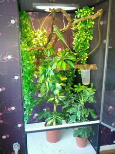 viv set up for my chameleon, what do you think? - Reptile Forums