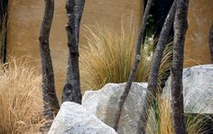 This talks about and shows images of the Unity Garden display made at the Melbourne International flower and garden show in 2018 Melbourne, Garden Show, Landscape Design, Gardens, Landscape Designs, Outdoor Gardens, Garden, House Gardens