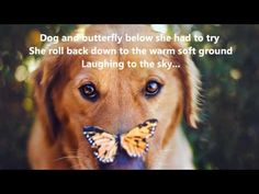 Golden Retriever with a Monarch Butterfly on his nose. Jessica Trinh 18 year old photographer based in Southern California Golden Retriever, Retriever Dog, Funny Animals, Cute Animals, Love My Dog, Dog Portraits, Creative Portraits, Dog Photos, Dog Life