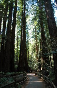 Muir Woods, San Francisco...There is really no picture that can capture the glorious peace of this enchanting place.