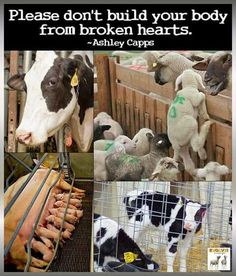 broken hearts, choose vegan