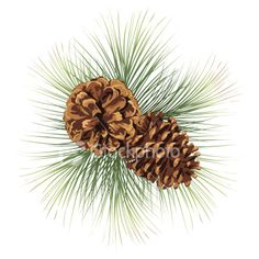 Pine Tree Clip Art | Pine Cones Illustration Royalty Free Stock Vector Art Illustration                                                                                                                                                                                 More