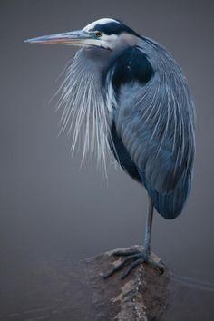 フォトギャラリー:ゴージャスな羽を誇る美鳥14選 | ナショナルジオグラフィック日本版サイト