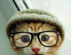 "Best ""cute pic"" via Pasadena SPCA"