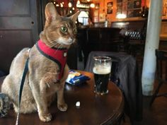 My mum took her cat to the local pub (shes over 18 in cat years) by annikaka cats kitten catsonweb cute adorable funny sleepy animals nature kitty cutie ca