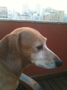 """Só quem é """" louca por seu cachorro """" sabe do que estou falando … Não é uma delicia ter..."""