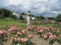 Illatozó rózsakert a nagytétényi hegyoldalban http://kozelestavol.cafeblog.hu/2016/06/01/illatozo-rozsakert-a-nagytetenyi-hegyoldalban/