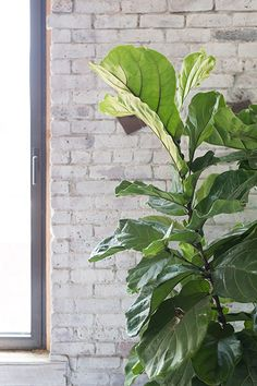 Houseplants - 25 Unexpected Things You Never Knew You Had To Clean - Photos