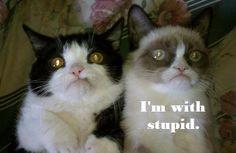 Grumpy Cat is with stupid ahahahahaha