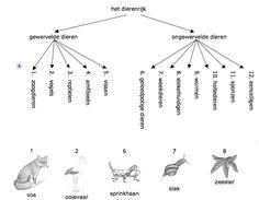 Indeling van het dierenrijk - MontessoriNet Study Hard, Montessori, Creepy, Teaching, Art, Google, Honey, Animaux, Biology