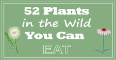 52 Plants In The Wild You Can Eat: Edible Greenry
