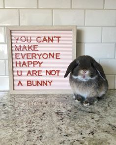 Quality advice from one bunny to any hooman. Quality advice from one bunny to any hooman. Cute Little Animals, Cute Funny Animals, Funny Cute, Funny Rabbit, Pet Rabbit, Cute Baby Bunnies, Funny Bunnies, Bunny Meme, Cute Bunny Pictures