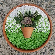Succulent Arrangements Pots Dish Garden 35 Ideas For 2019 Succulents In Containers, Cacti And Succulents, Planting Succulents, Planting Flowers, Cactus Plants, Growing Succulents, Container Flowers, Air Plants, Succulent Gardening