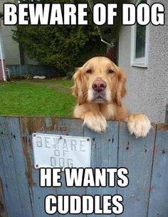 "beware of dog:) Happy friday all:) Phoenix dog training!!! ""k9katelynn"" ) see more about scottsdale dog training at k9katelynn.com :) from your friends at k9katelynn:)"