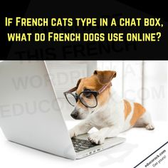 French Dogs, Funny French, French Classroom, Classroom Walls, French Posters, Types Of Cats, Poster Making, Hallways, High Quality Images