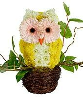 Flowers arranged in owl shape........