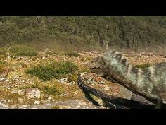 Walking with Dinosaurs: The Movie: Dino Files: Dino Discoveries --  -- http://wtch.it/kQmrl