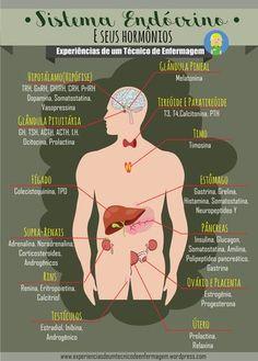 Sistema Endócrino e seus Hormônios - Med Student, Student Studying, Student Life, E Learning, Mental Map, Shiatsu, Medical Anatomy, Science Biology, Student Nurse