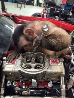 Id trust this monkey with my car - Funny Monkeys - Funny Monkeys meme - - I'd trust this monkey with my car The post Id trust this monkey with my car appeared first on Gag Dad. Vw T3 Camper, Vw Touran, Funny Images, Funny Photos, Funny Animals, Cute Animals, Gas Monkey Garage, Mechanic Humor, Tier Fotos