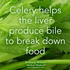 Health Remedies Celery helps the liver produce bile to break down food Health Facts, Health And Nutrition, Health And Wellness, Health Tips, Health Fitness, Mental Health, How To Stay Healthy, Healthy Life, Healthy Living