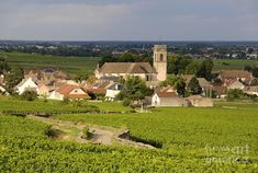 Vineyard And Village Of Pommard. Cote D'or. Route Des Grands Crus ...