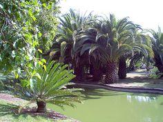 Estilo Tropical de Jardim.