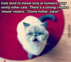 "What ""meow"" really means. http://mbinge.co/1rvyD1s"