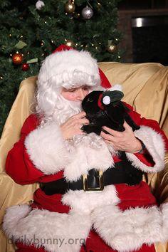 Bunny tells Santa what she wants for Christmas tomorrow - December 24, 2014