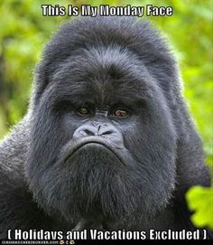 Mountain Gorilla ~j (My favourite great ape as a child) Primates, Mammals, Gorilla Gorilla, Silverback Gorilla, Gorilla Funny, Animals And Pets, Funny Animals, Cute Animals, Wild Animals